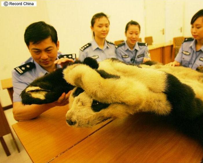 pandafur2.jpg