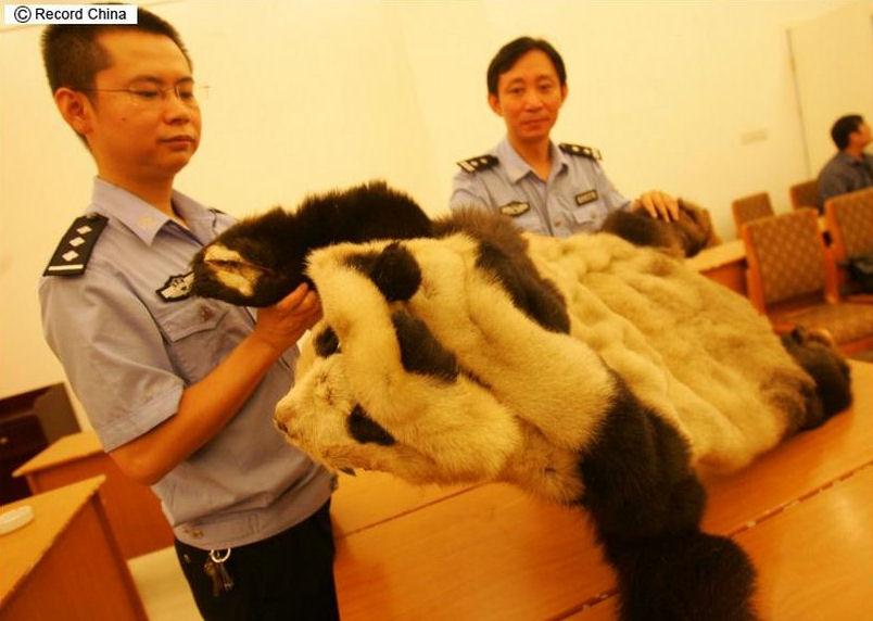 pandafur6.jpg