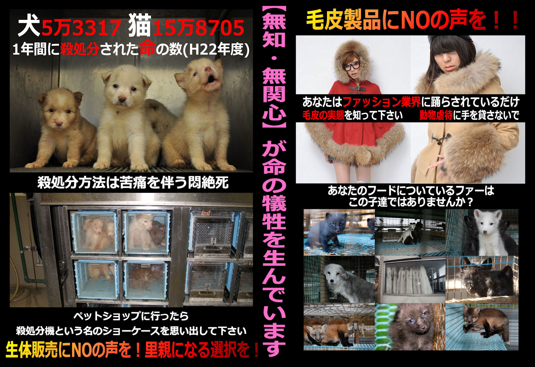 satukegawa2_20130106040057.jpg
