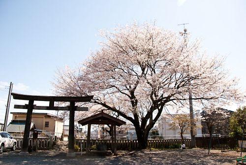 富士宮 富知神社 鳥居