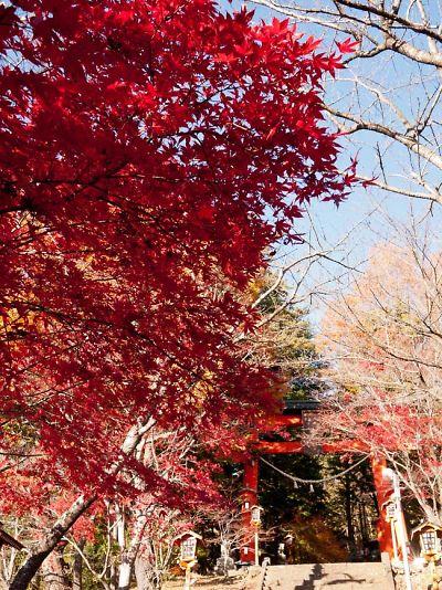 富士吉田 忠霊塔の紅葉 2012