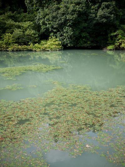 菊川の溜池5