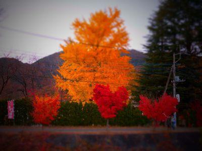 2012 河口湖もみじ祭り_01
