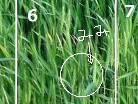 クイズ04-024耳