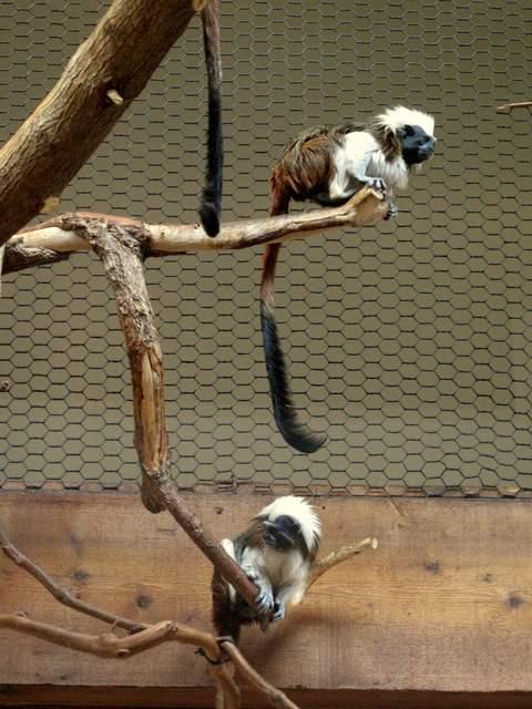 07-16 Zoo 082