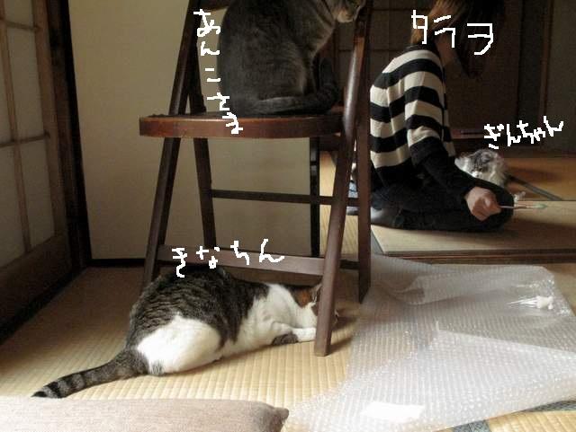 tarawo.jpg