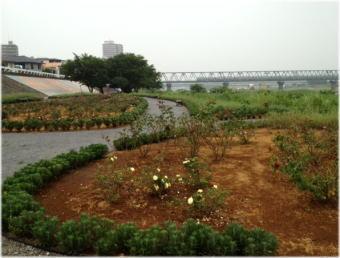 sagamigawa_rose_garden3.jpg