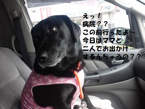 ママとお出かけ?