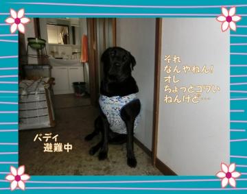 バディ避難中 (360x283)