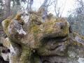 鬼や牛の顔にも見えるアカシデの倒巨木