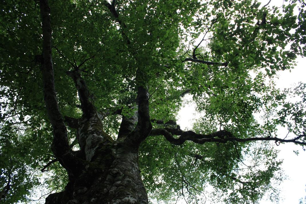 20140831マザーツリー