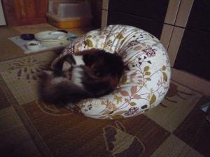 秋バラと猫たち4