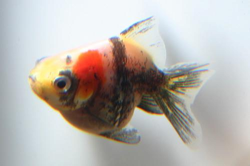 panda ryuukin20121212