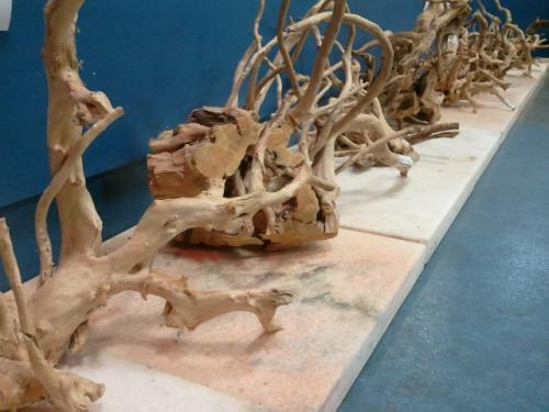 branch wood