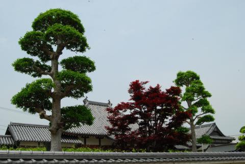 地福寺10