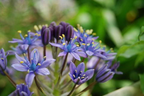 季節の花1