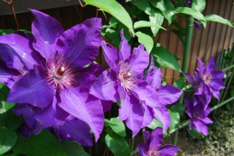 季節の花10
