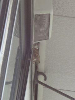 すずめ窓のへり
