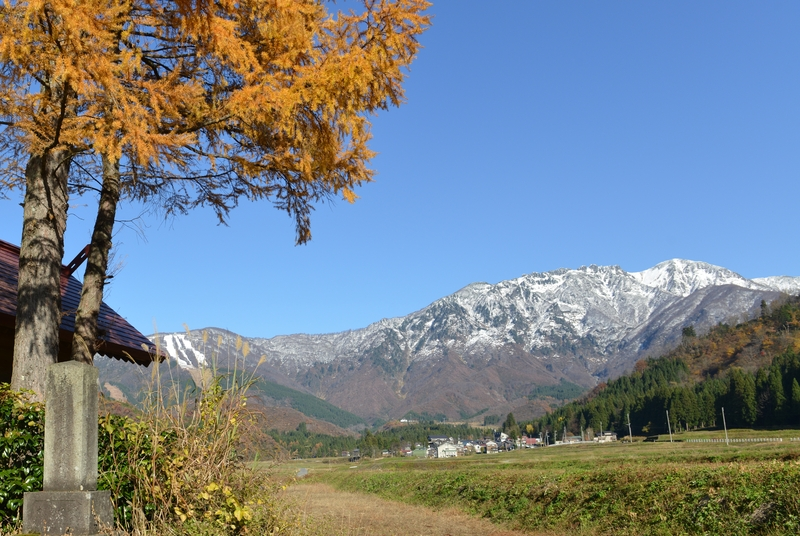 八海山  紅葉の樹と共に-3