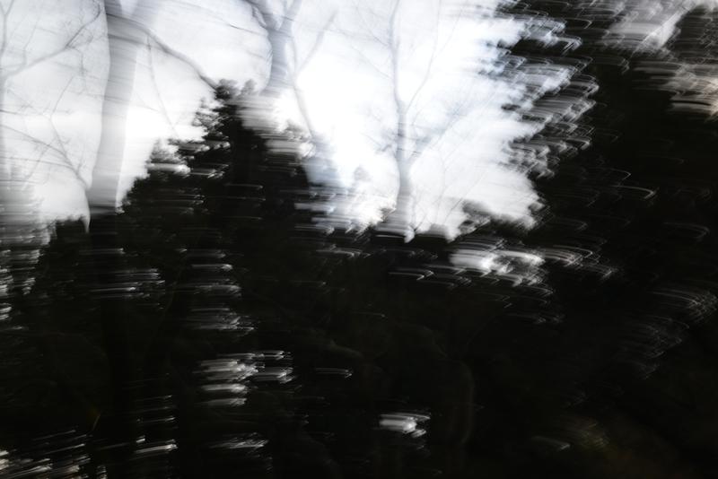 林の空-1