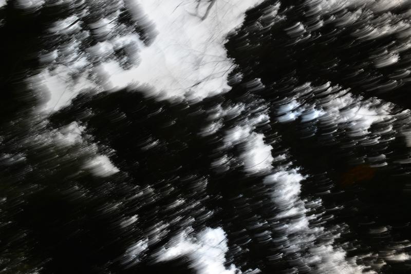 林の空-2