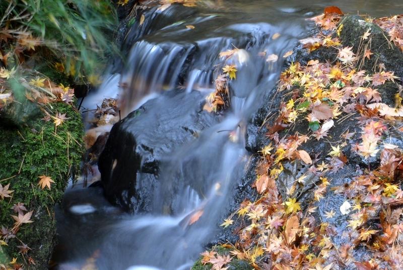落葉 小さな流れ-1