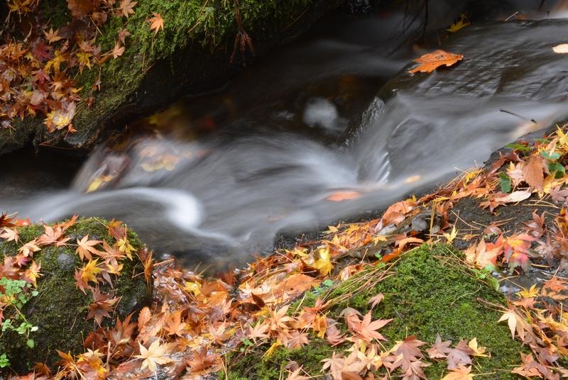 落葉 小さな流れ-3