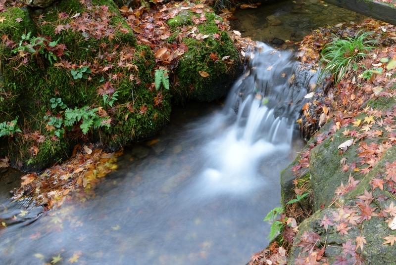 落葉 小さな流れ-4