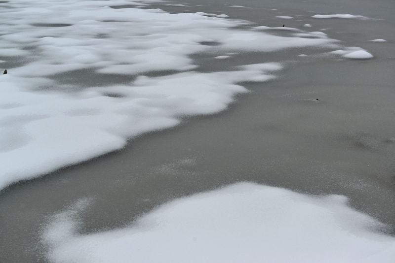 雪  レンコン畑-1