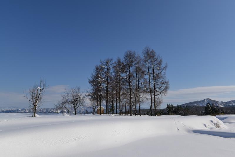 雪  青空の下-2