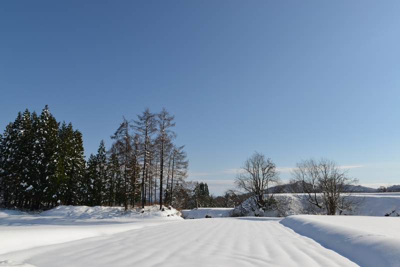 雪  青空の下-3