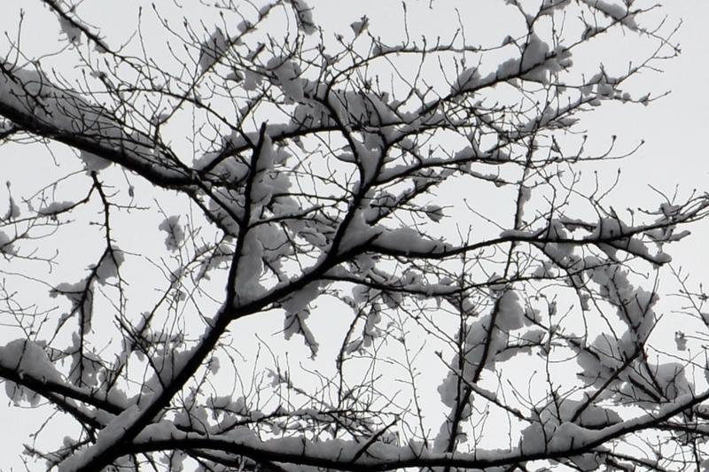 枝に雪-1