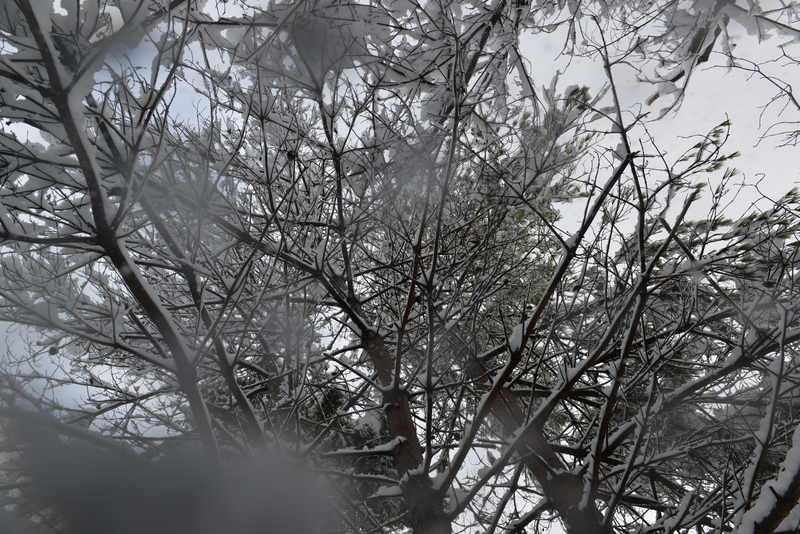 枝に雪-2