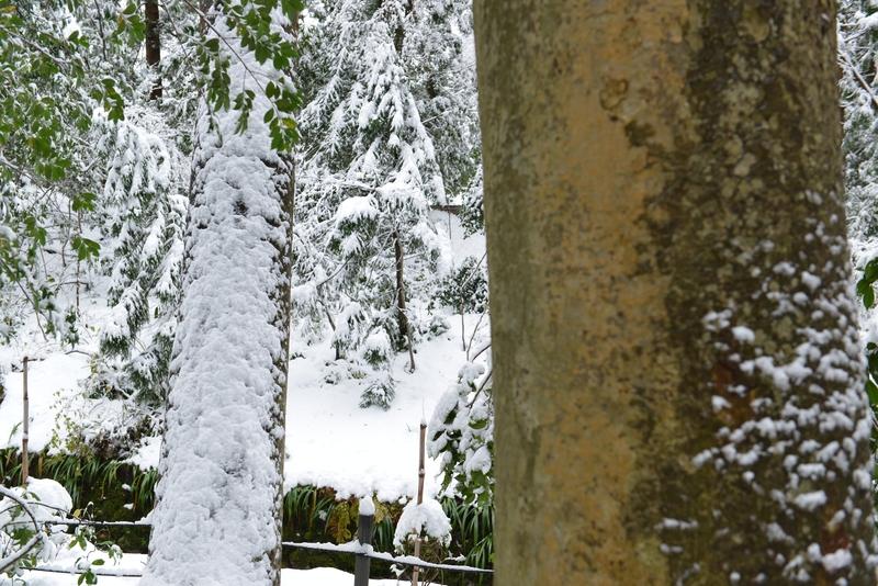 雪と樹と-2