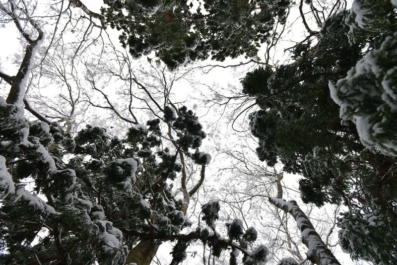 雪と樹と-3