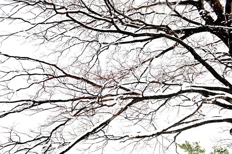 樹と雪と-2