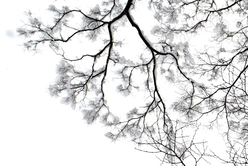 樹と雪と-3