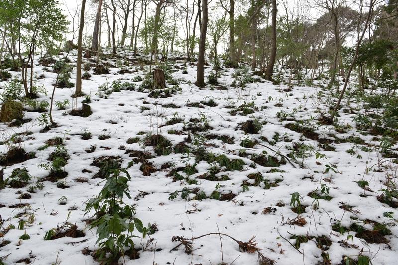 雪の公園-2