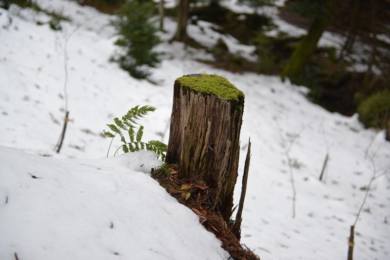 雪の公園-3