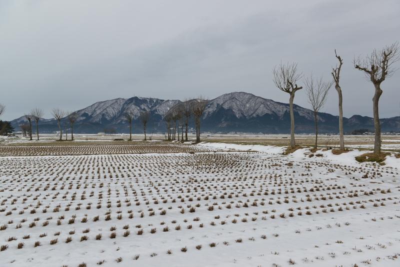 雪のはさ木-1