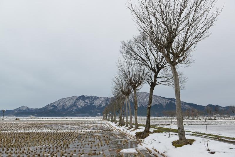 雪のはさ木-3