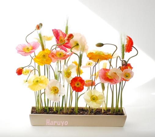 spring_DSC_5312.jpg