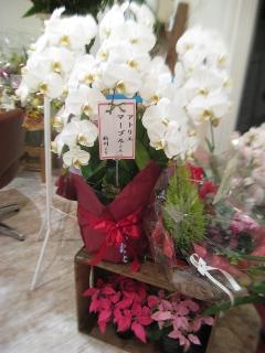 アトリエマーブル 開店 12/13