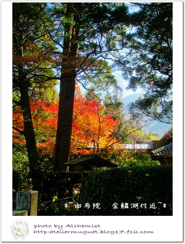 11-y1_20121126011558.jpg