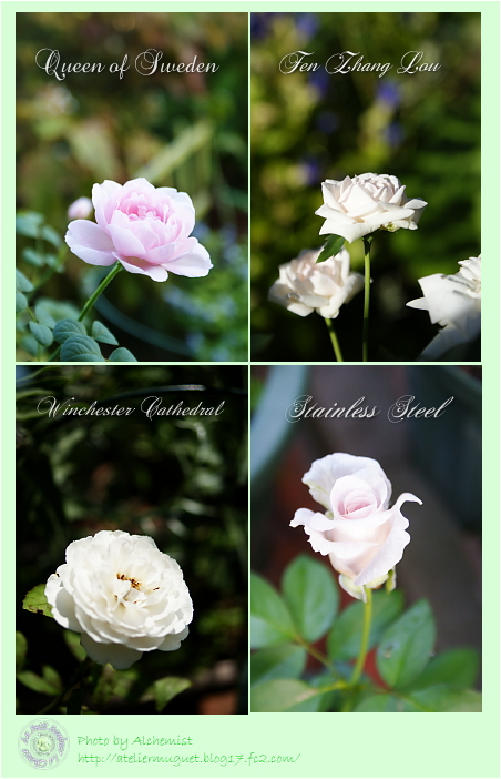 9r-roses.jpg