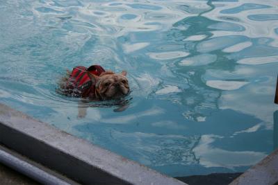 2012.9.29 fetch! プール 130