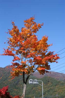 2012.11.7.8  山梨・朝霧 002