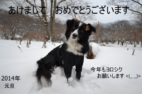 DSC_0063-001_20140101133752bf4.jpg