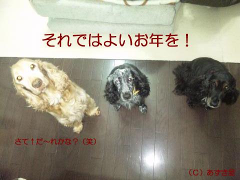 azuki1479.jpg