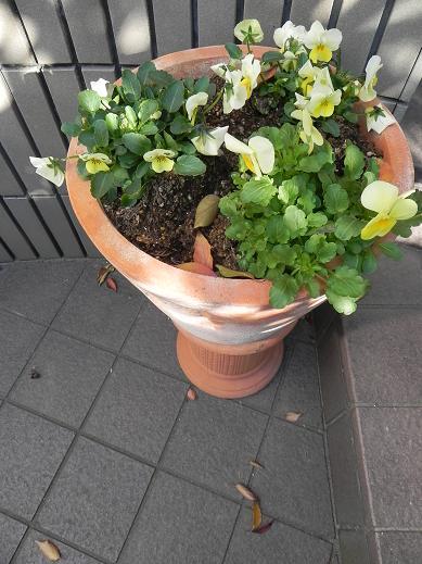 biora6_20121214202207.jpg